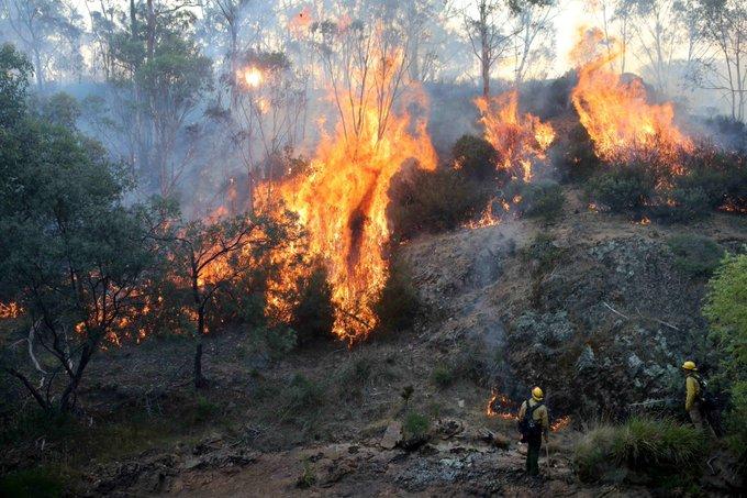Hertfordshire Freemasons donate thousands after Australia bushfire